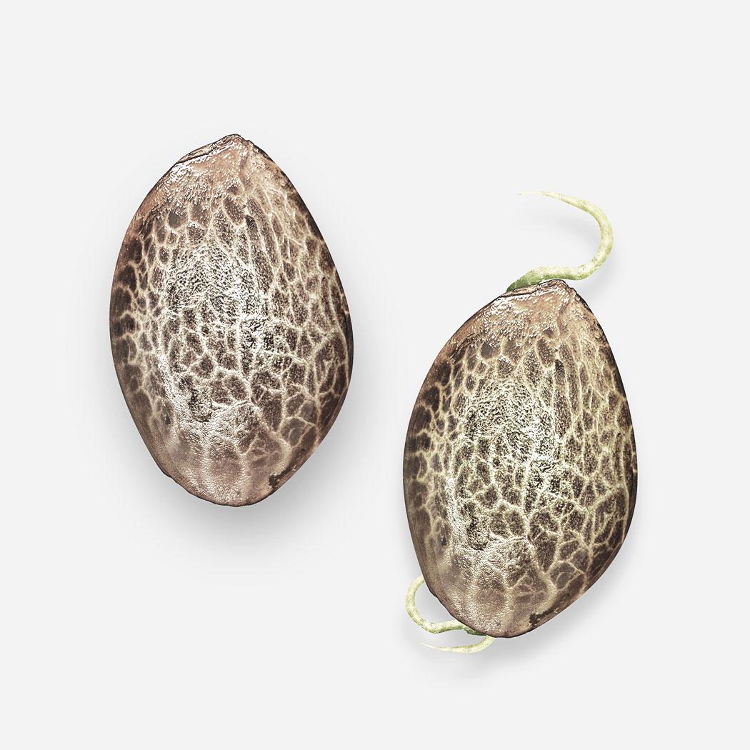 seed-budcbd